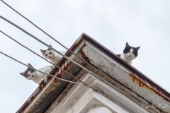 Roof top cats in Kamambaka, Greece