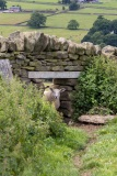 2_Yorkshire-Dales-6-of-40