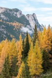 Autumn Trees on the Tre Cime panoramic road
