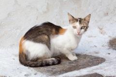 Street cat in Mykonos, Greece