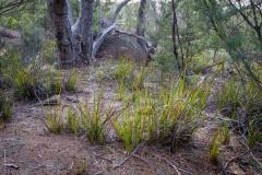 Mount-Amos-walk-3-of-33