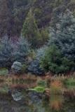 Forest pool vegetation