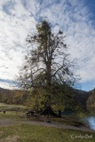 Tree with misseltoe by Jezero Kozjak