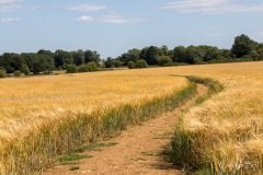 july-blog-cotswolds_4_IMG_8175