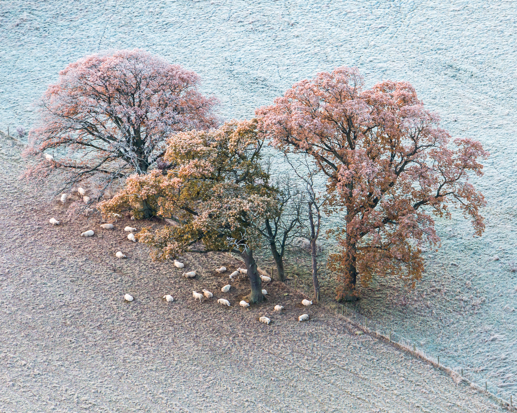 November frost below KInnoull hill, Scotland