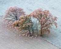 November frost below KInnoull hill, Scotland