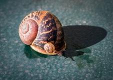 A snail on a snail ...