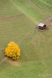 Autumn tree and farm building in Val Badia