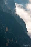 Tree study, vallone di Lavaredo