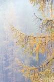 Autumn larch, Passo Giau