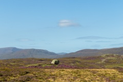 Heather and rock near Durness