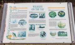 Tay Wildlife Information Plaque, Tay Street