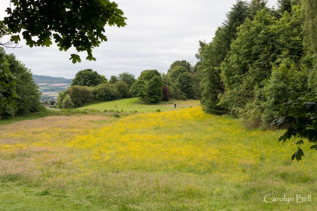 Viewlands Park