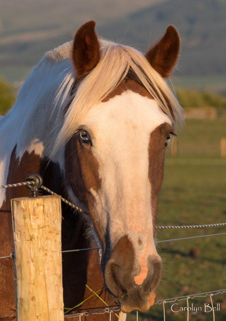 white eyed horse